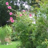 7 Kudra Garten